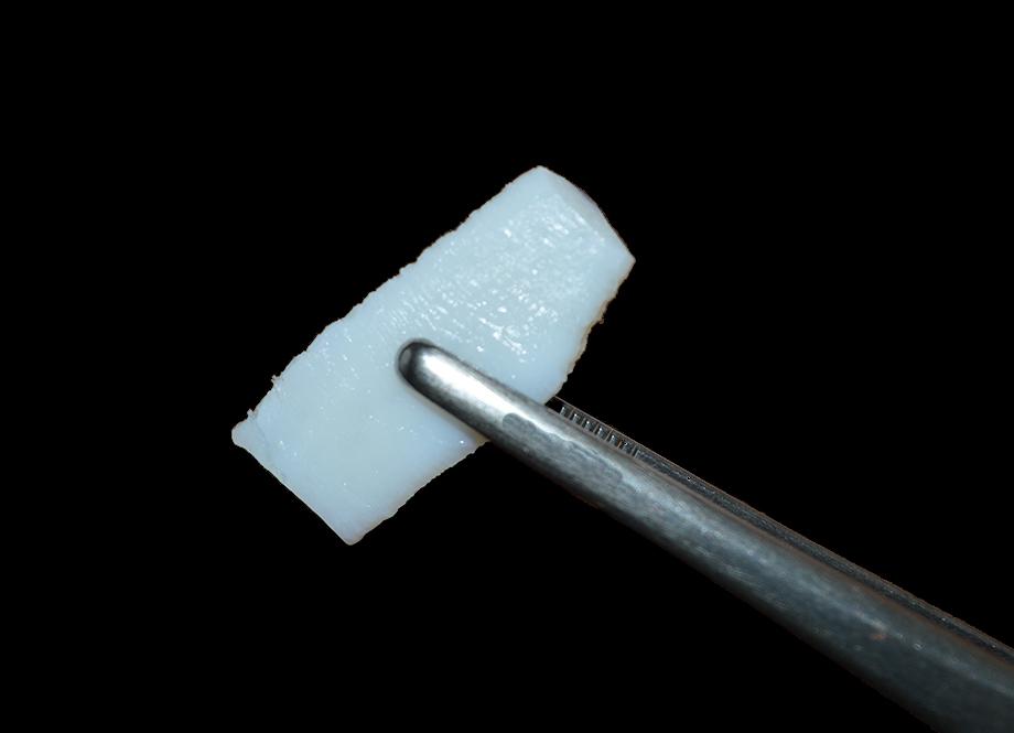 غضروف- بین دنده ای | همانند ساز بافت کیش